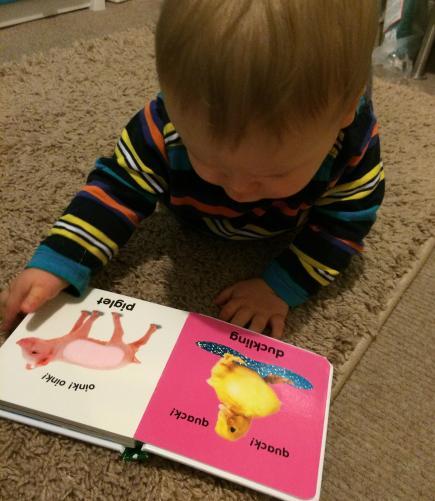 Baby reading farm book
